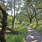 Sonoma Scent Studio Forest Walk