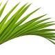 Tropische Sommerfantasien von Comptoir Sud Pacifique