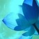 Lotus - Mystische Wasserpflanzen