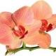 Neue Düfte von Olympic Orchids