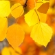 Die Düfte des Herbst