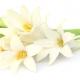 La Perla Private Collection: Lotus Shadow, Contemporary Tuberose und White Iris