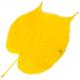 Der Herbst riecht bunt - Herbstdüfte Teil 1/2