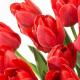 Love in Red - Fragrantica feiert den Valentinstag auf Instagram