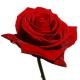 Luscious Roses von Joanne Bassett