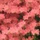 Blumen ohne Ende bei Macy's in New York City